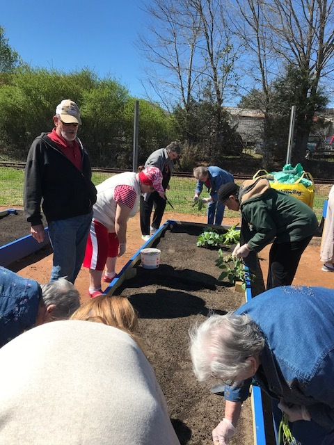Master Gardener Ron Plaster, oversees our first spring planting in our Senior Community Garden.