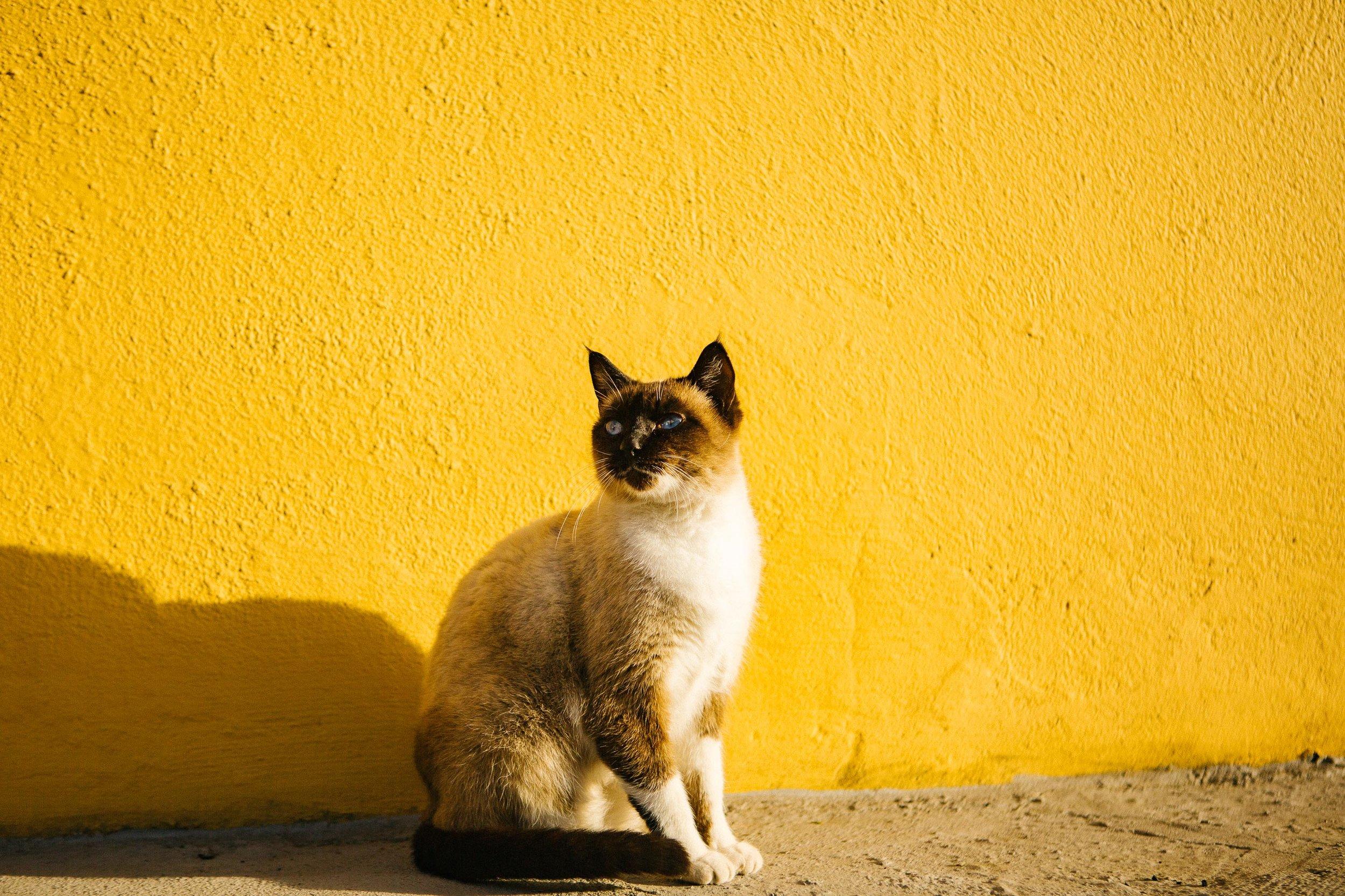 Seb_Gran_Canaria-1.jpg