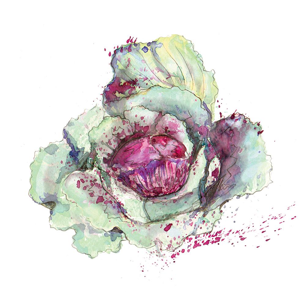Red Cabbage_RGB.jpg