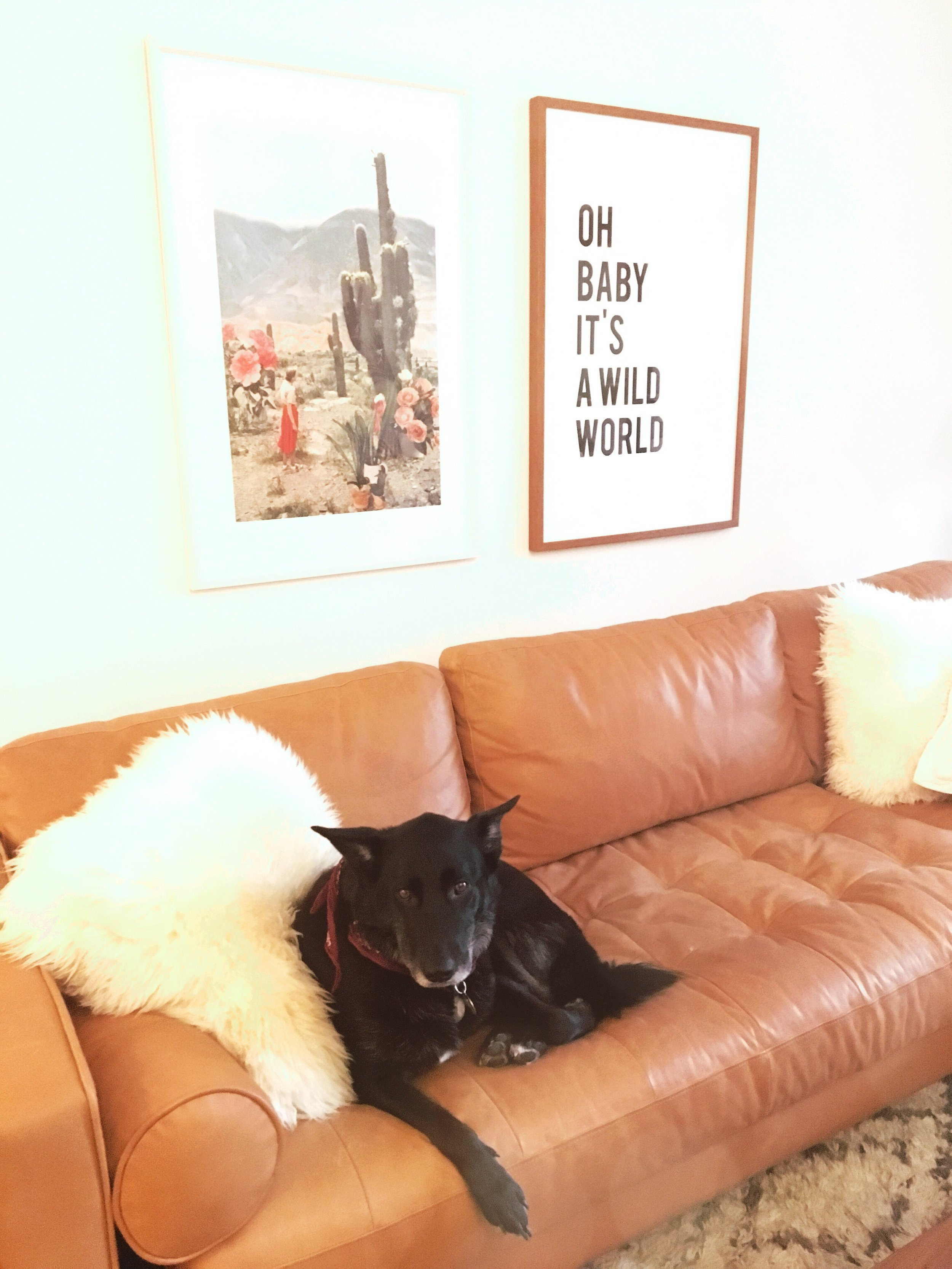 THE FUNKY FRESH / BOHO DREAMS LIVING ROOM