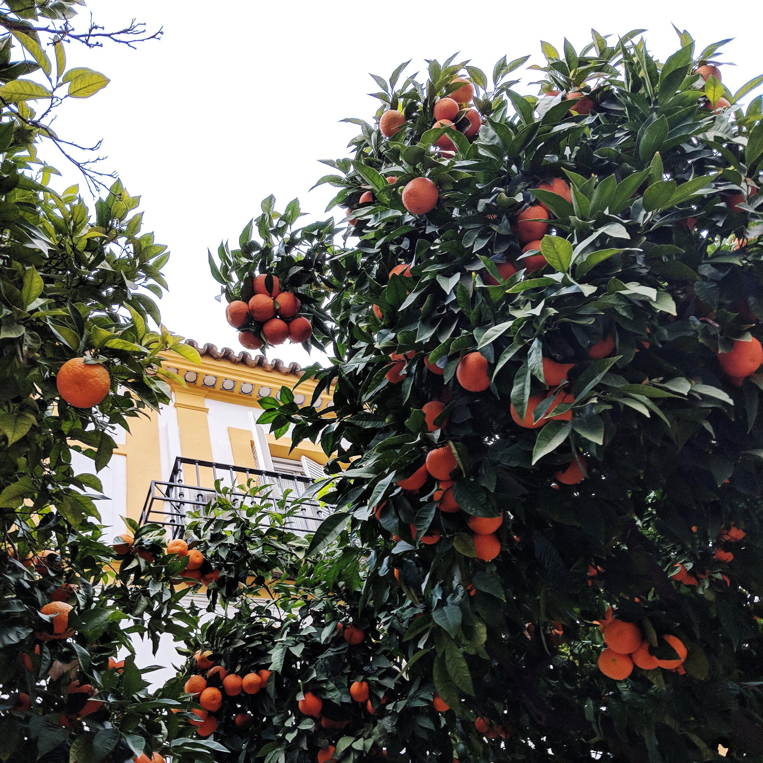 from:  under the orange tree