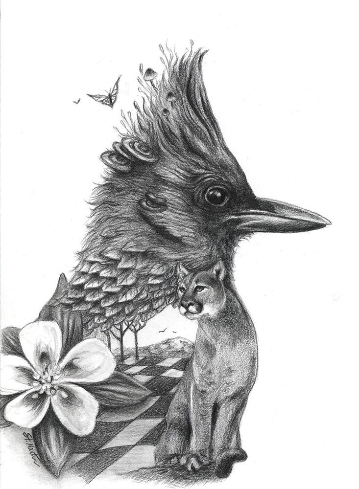 Steller's Jay - for Changelings - Corina St Martin.jpg