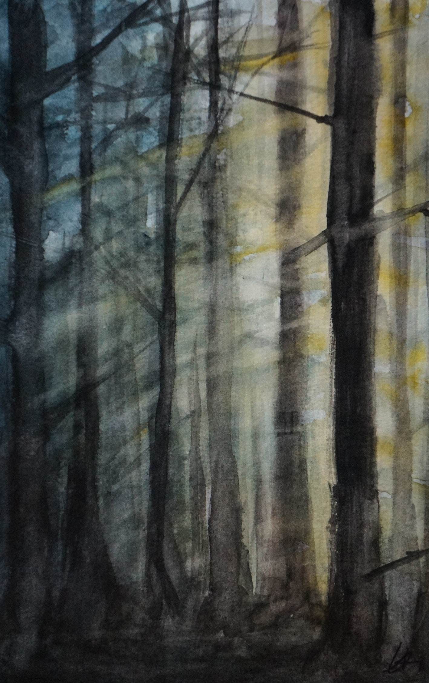 Sunset Forest (2017)