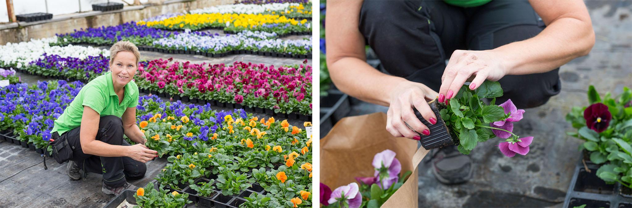 Forsa handelsträdgård 8 kopiera.jpg