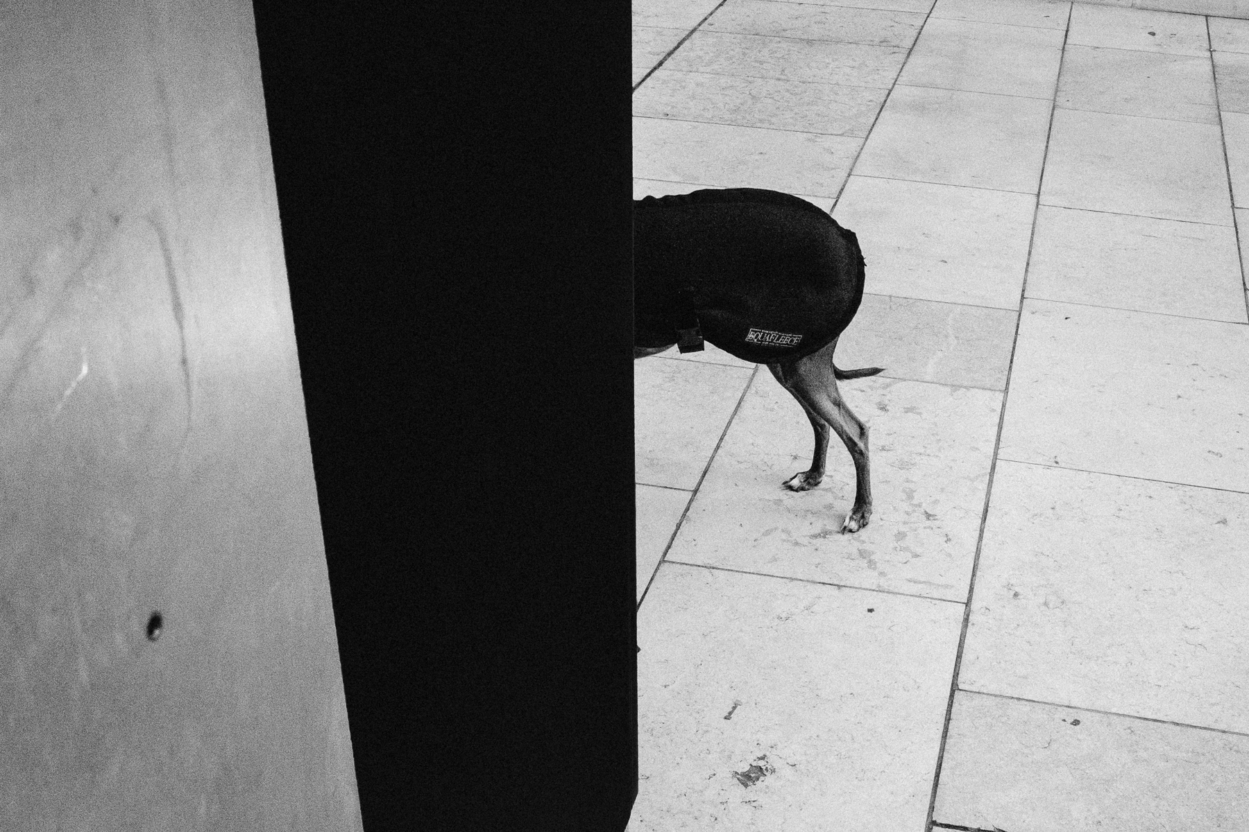 DOGS LEGS, PADDINGTON