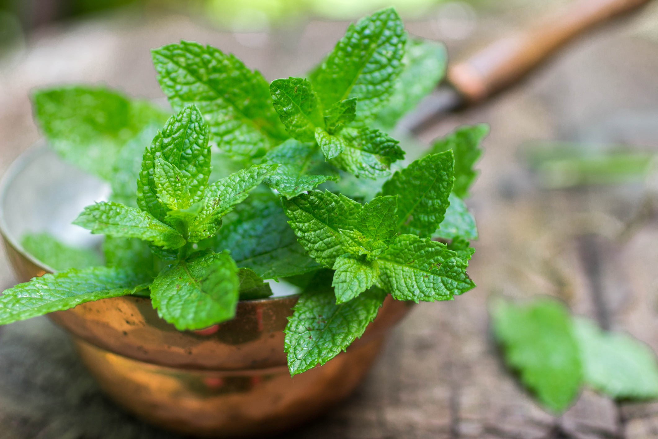 Mint - Just the thought of the aroma and the taste of fresh mint leaves feels like a blast of cool air.  We use only the actual leaves picked straight off the plant.  No artificial flavors here.