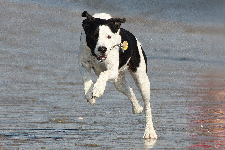 Fannie: shore speeder...