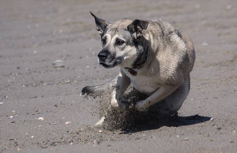 Roxy: brake test!!