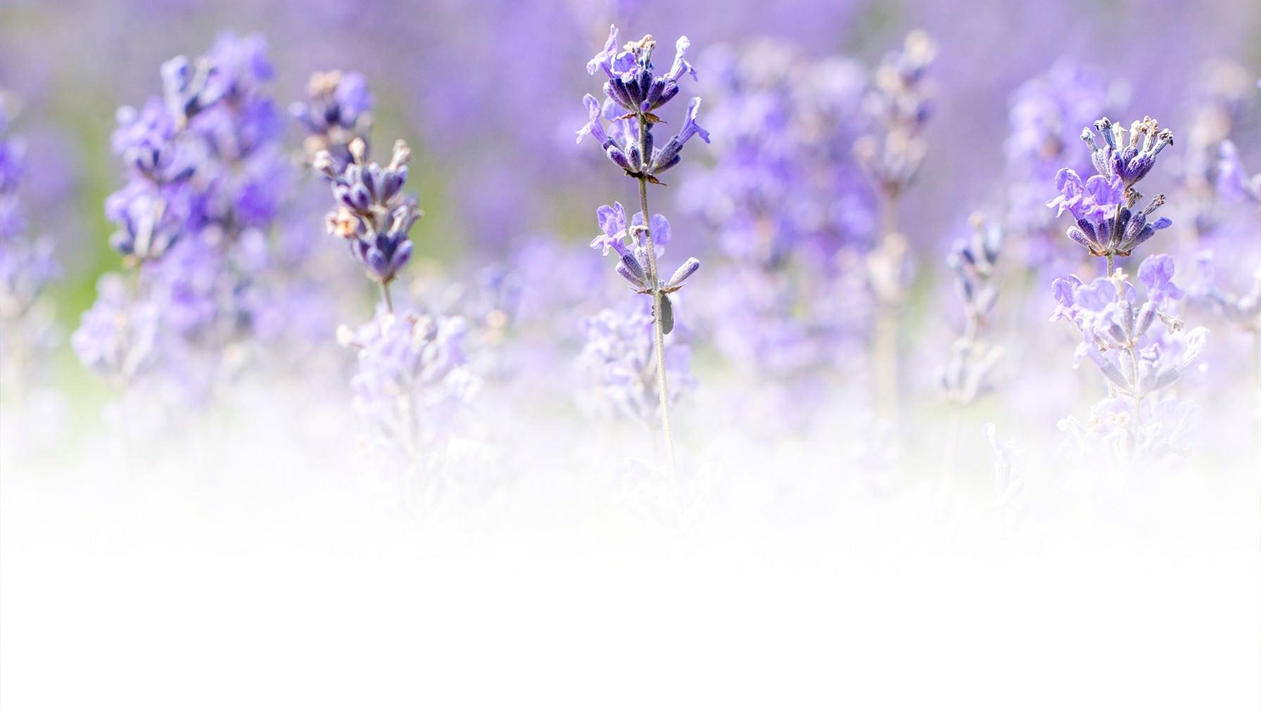Defensive planting: lavender, peppermint, geraniums...