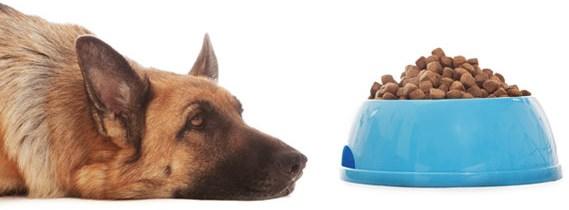 DOG WONT EAT.jpg