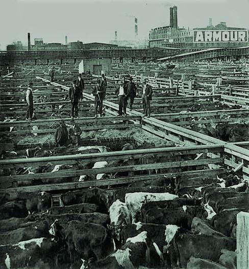 Union Stockyard: Chicago, IL (1905)