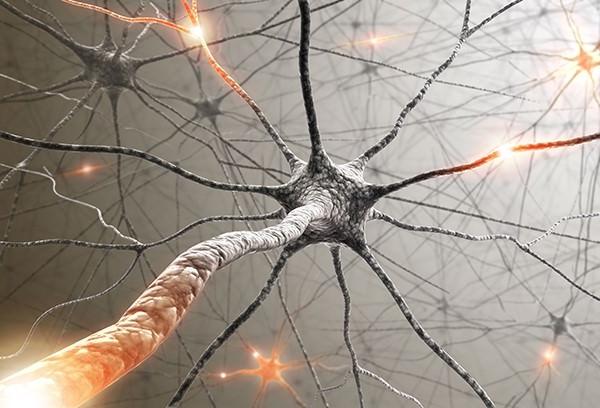 Neural pathways