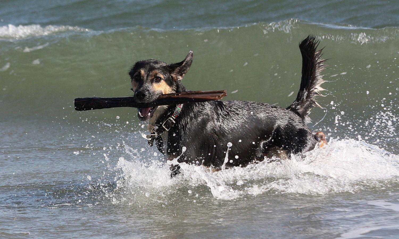 Conrad: never more at peace, than at Jennings Beach…