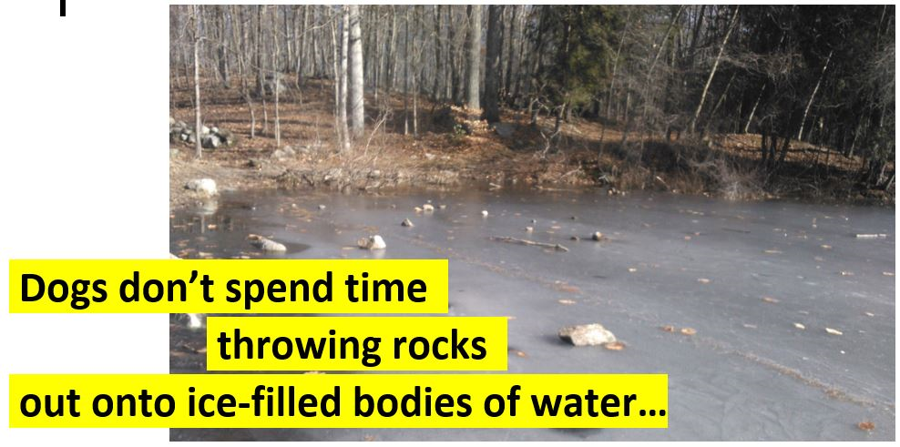 Dogs don't throw rocks onto ice.png