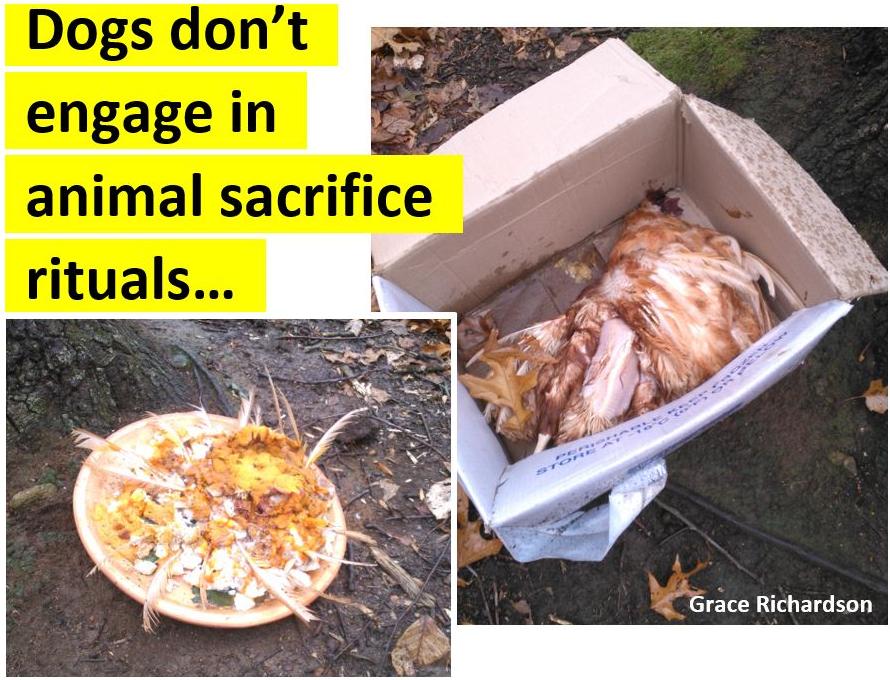 Grace - Animal Sacrifice (rev).png