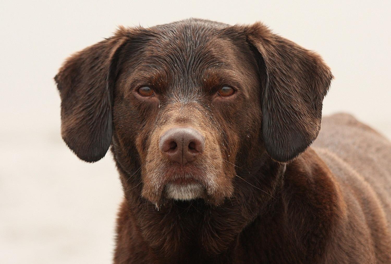 Max: the gaze of a courser…