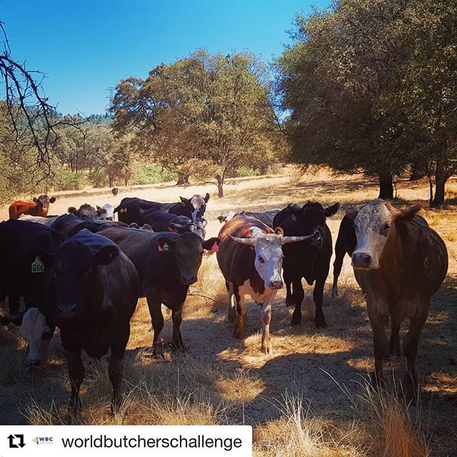 #Repost @worldbutcherschallenge with @get_repost ・・・ After the most incredible trip touring Sacramento - host city of the #2020WBC - I've attempted to summarise my experience. Link in our bio!  #WBCTourSacramento #wbc2020 #WorldButchersChallenge #butcherycomp #butchersontour #butchersofinstagram #butchersofamerica #sacramento #california #butchersnews #butchers