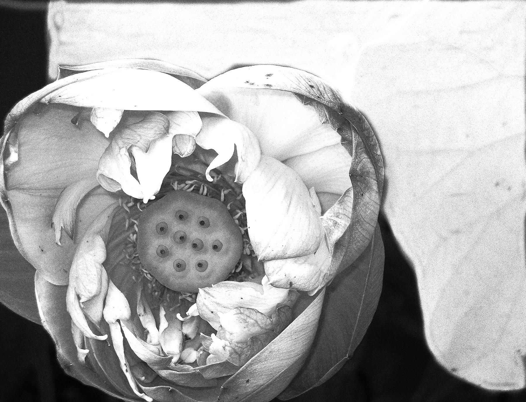 Black & White Flora-2.jpg