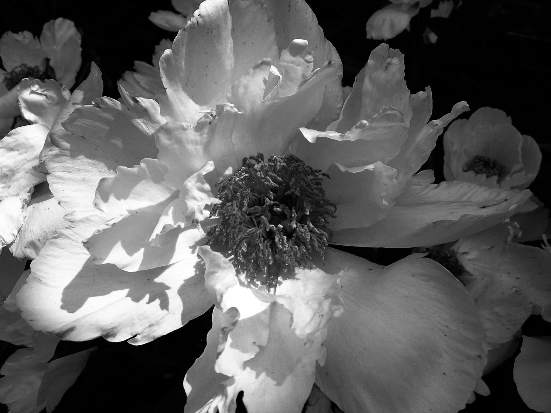 Black & White Flora-3.jpg
