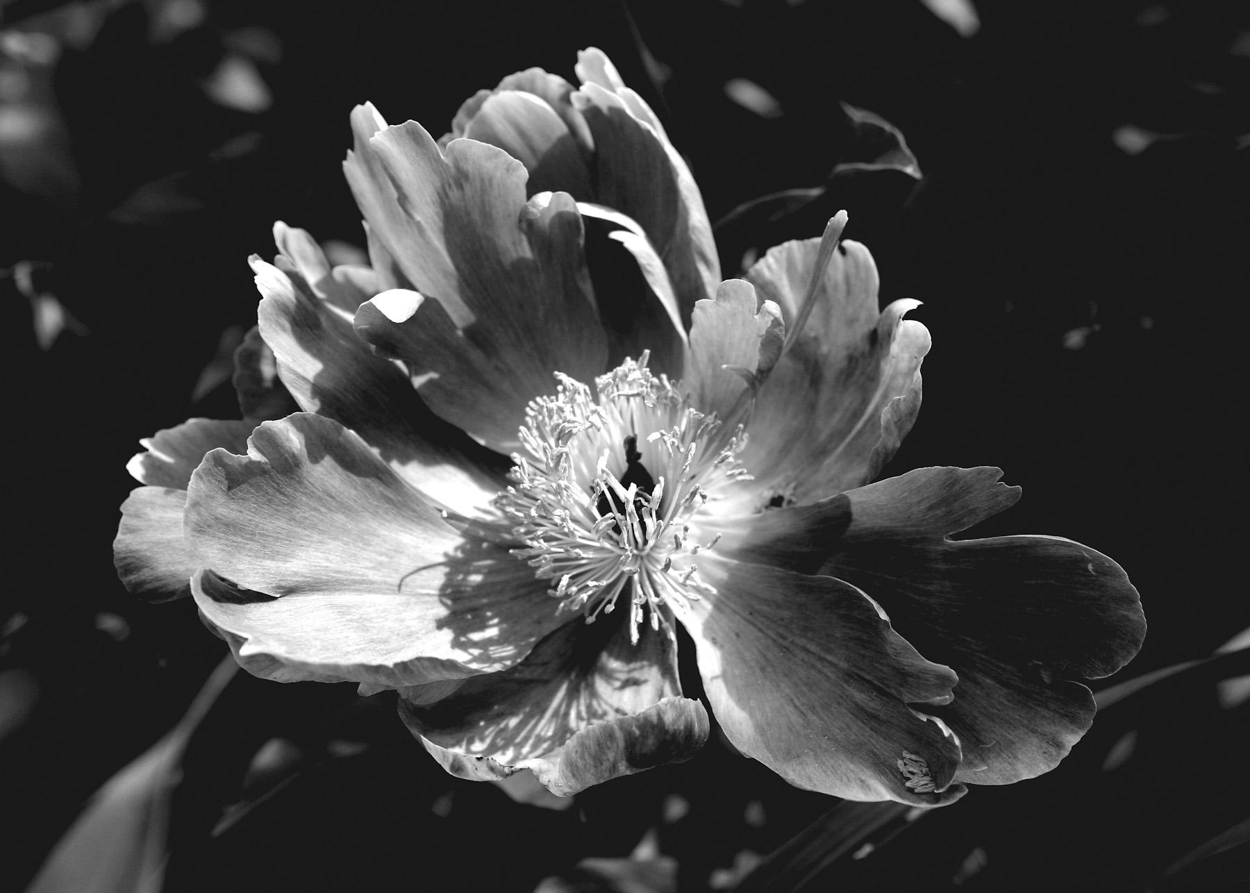 Black & White Flora-5.jpg