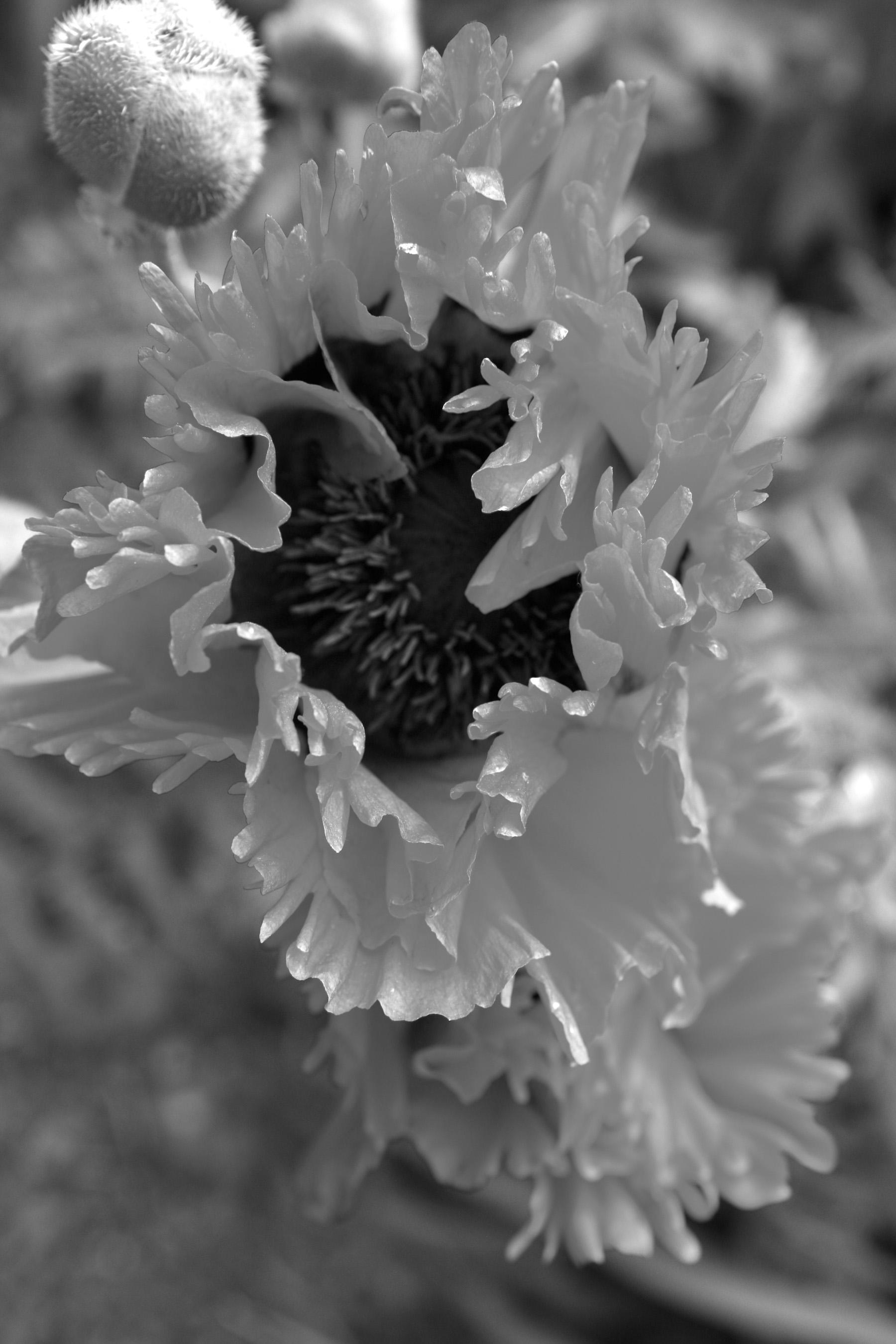 Black & White Flora-6.jpg