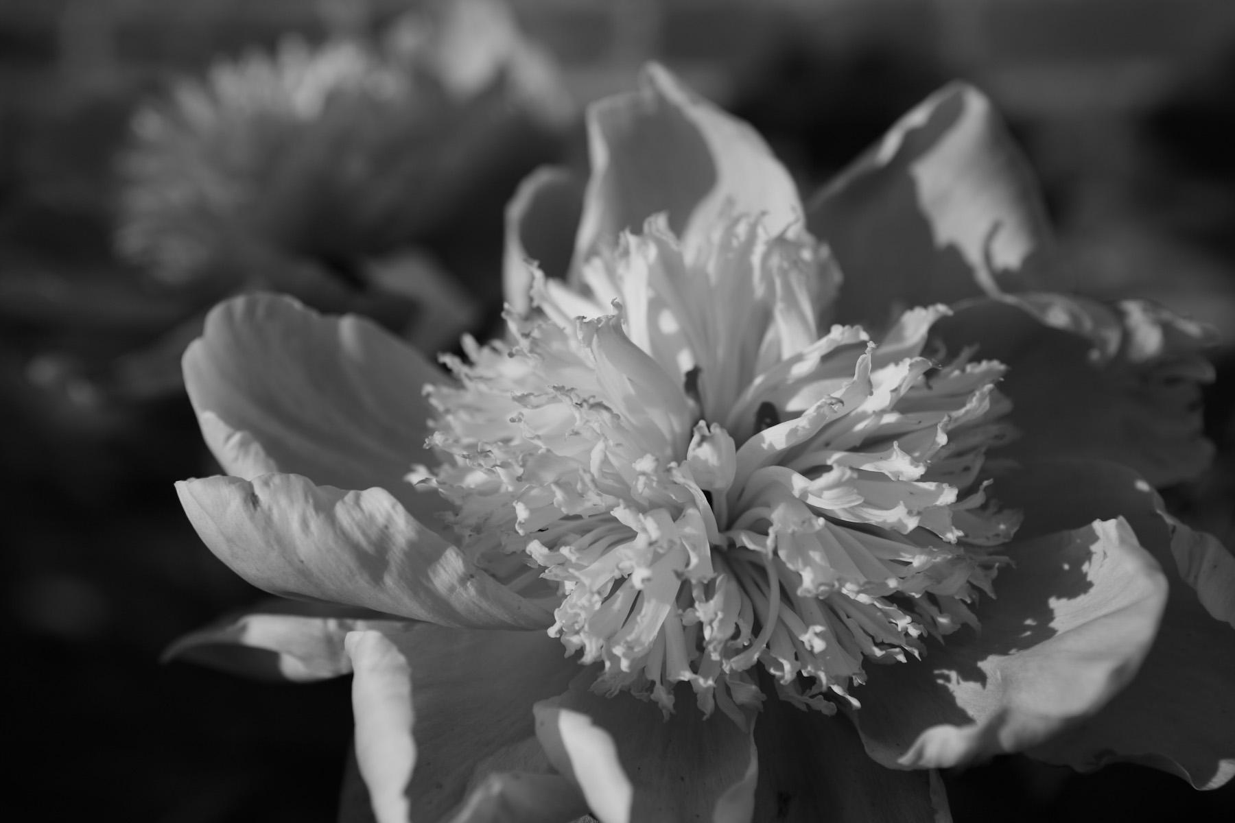 Black & White Flora-8.jpg