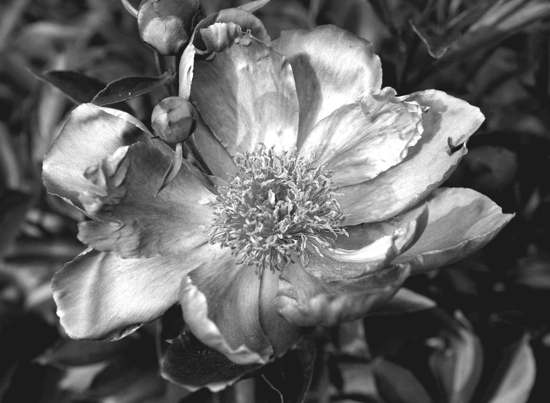 Black & White Flora-7.jpg