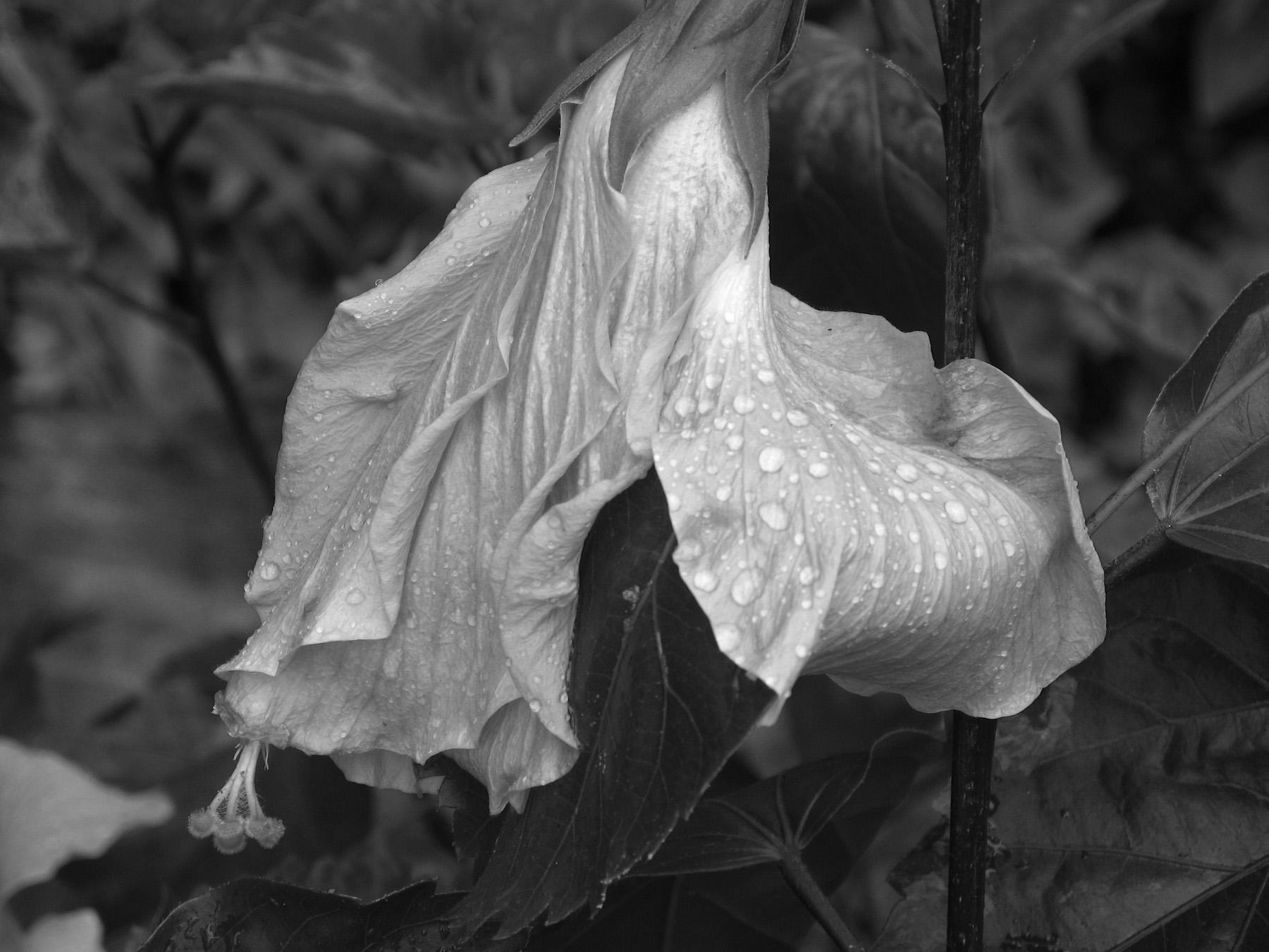 Black & White Flora-9.jpg