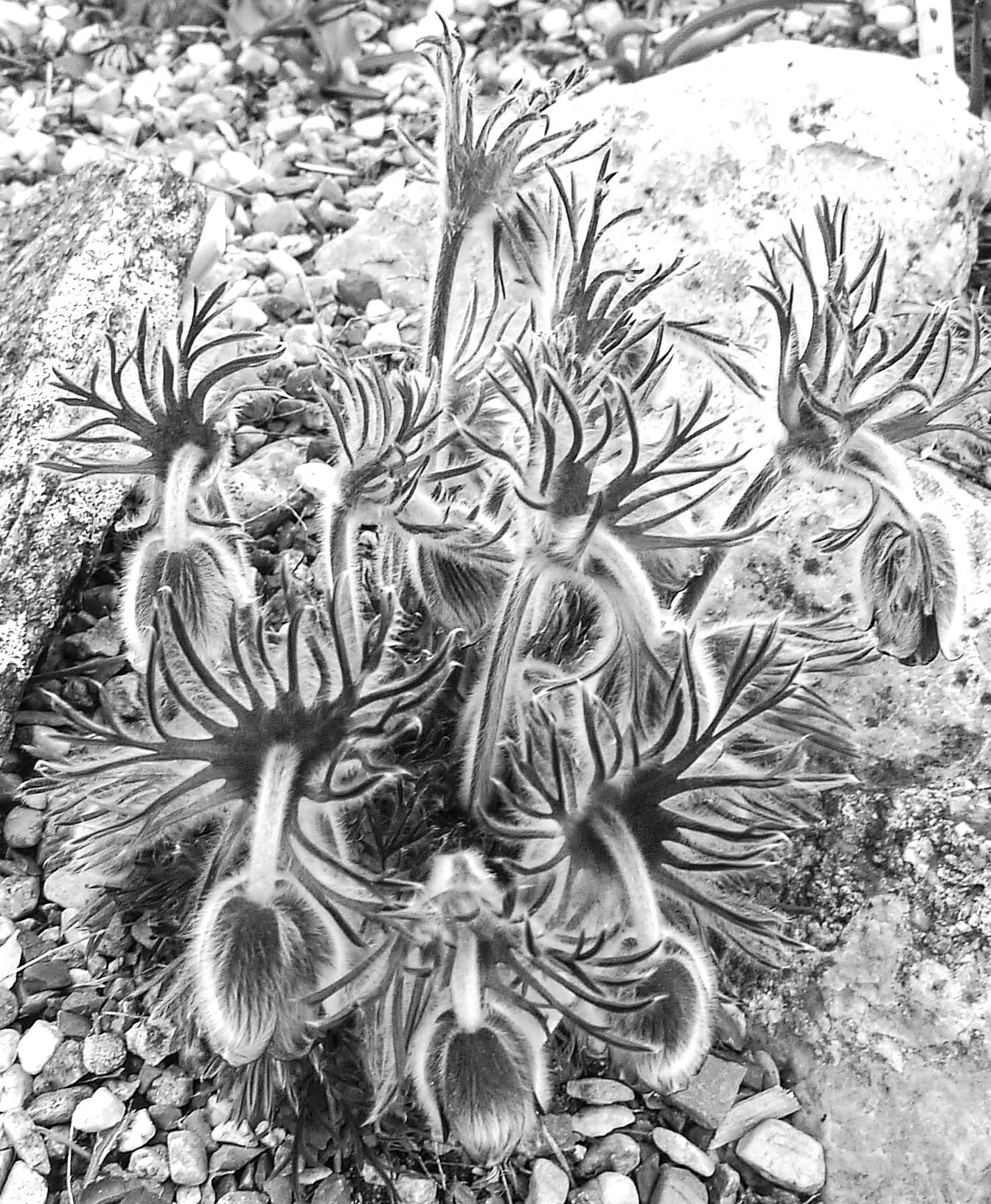 Black & White Flora-12.jpg
