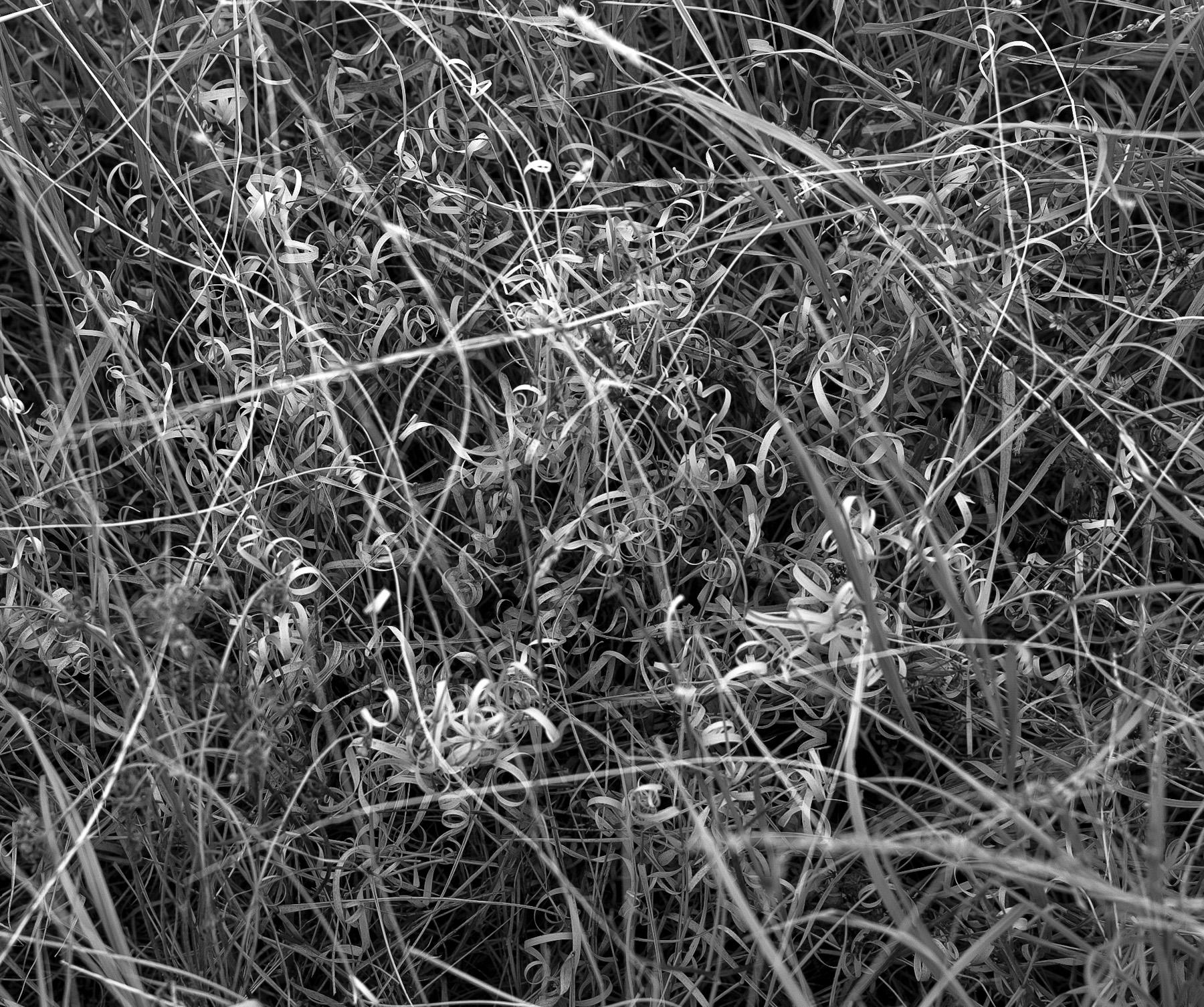 Black & White Flora-16.jpg