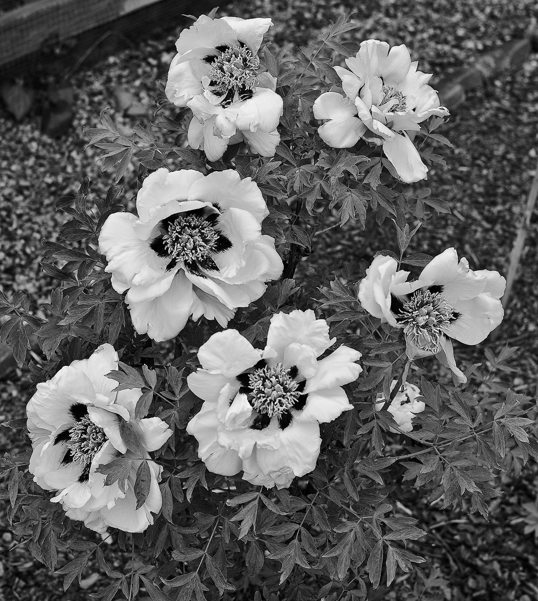 Black & White Flora-14.jpg