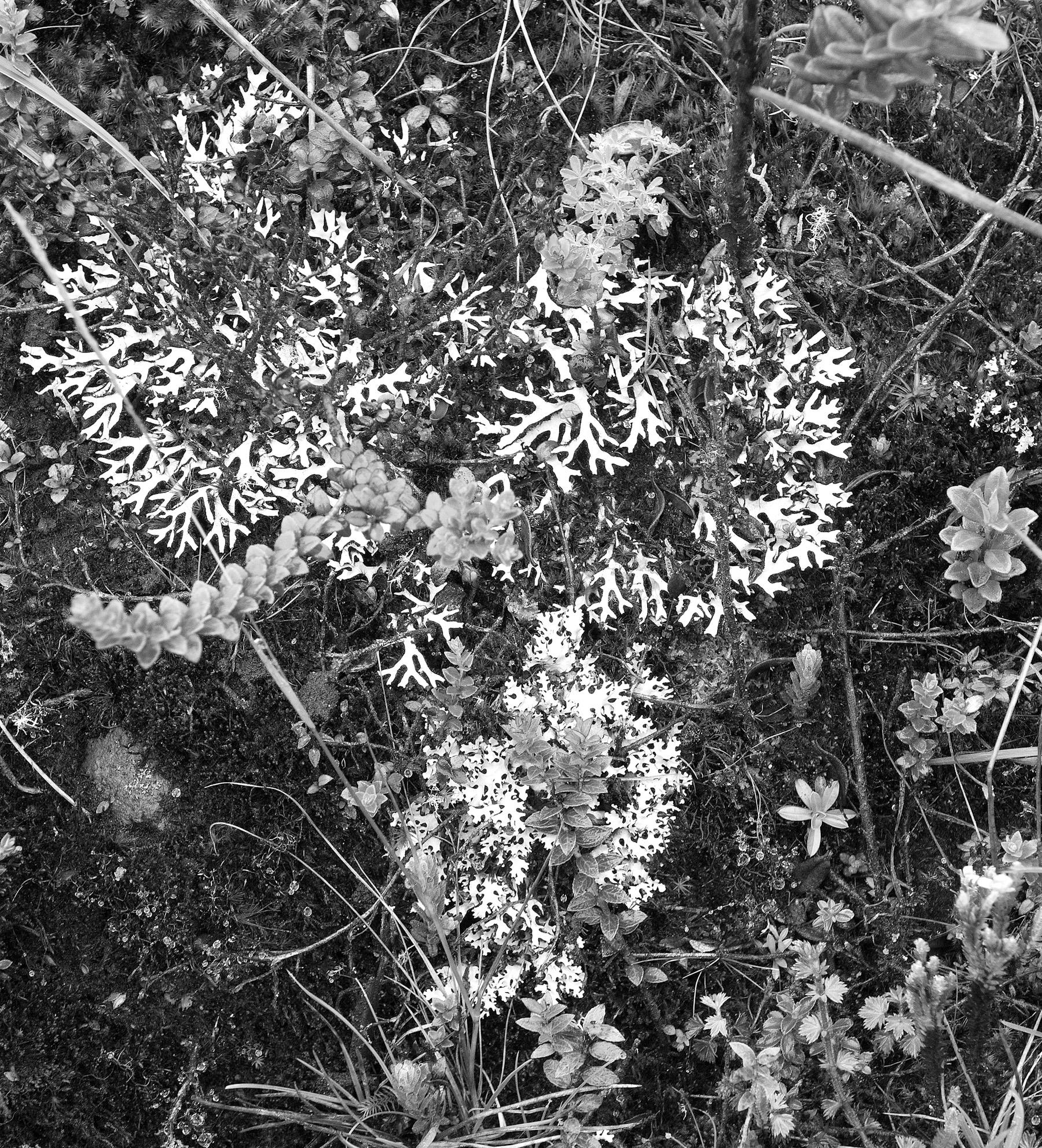 Black & White Flora-20.jpg