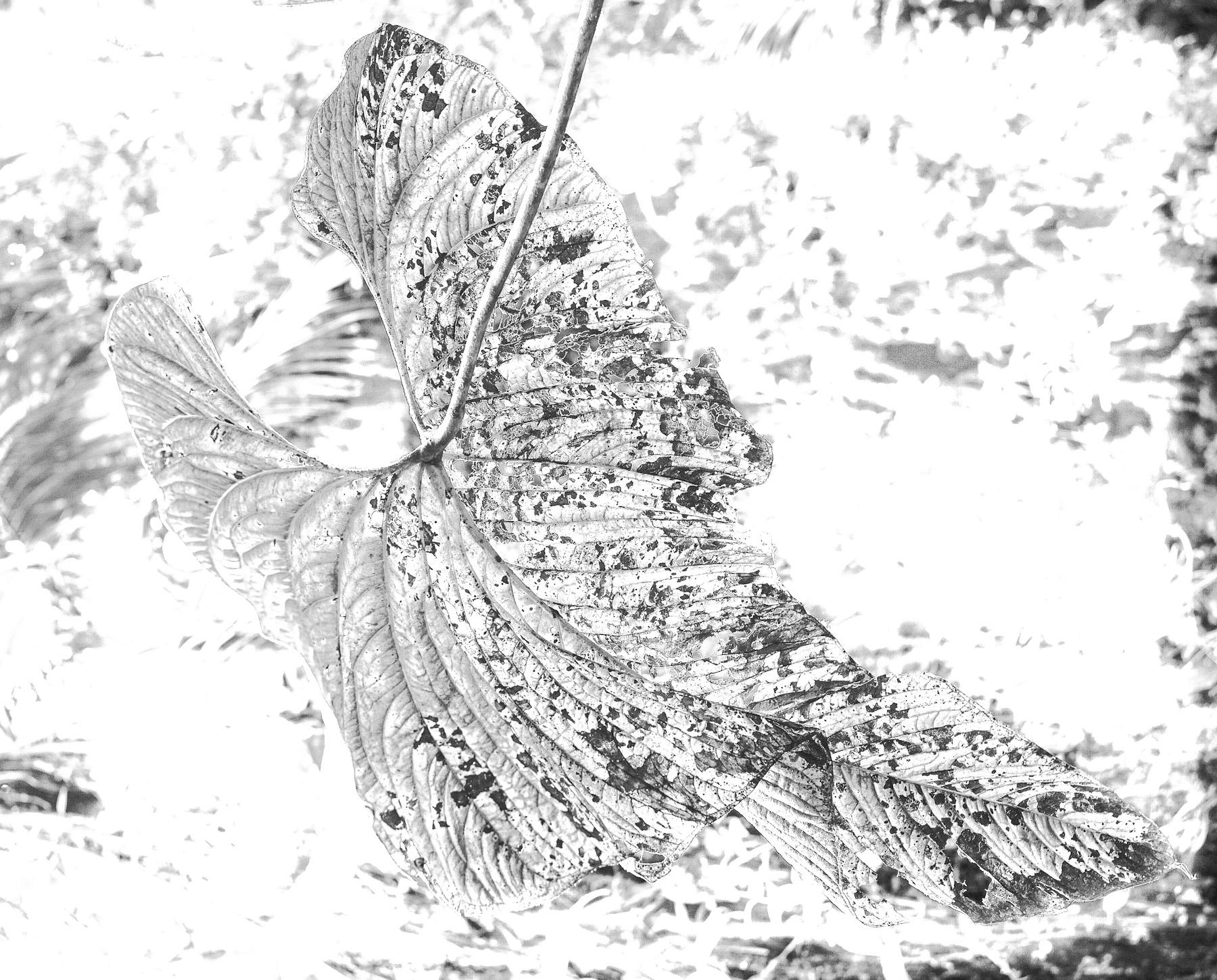 Black & White Flora-24.jpg