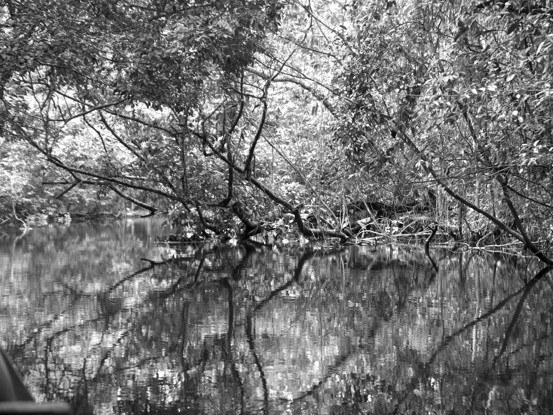 Black & White Flora-26.jpg