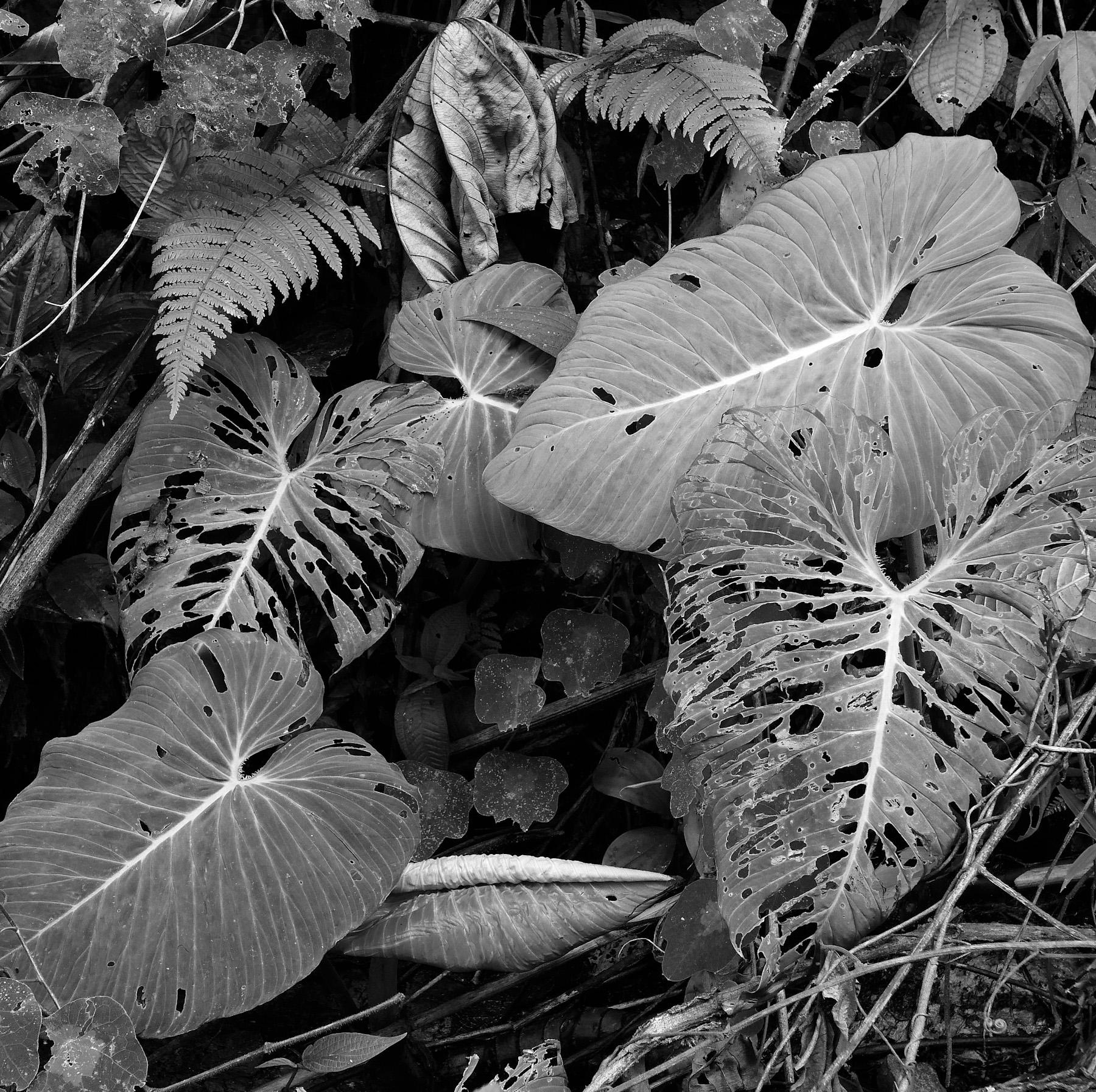 Black & White Flora-25.jpg