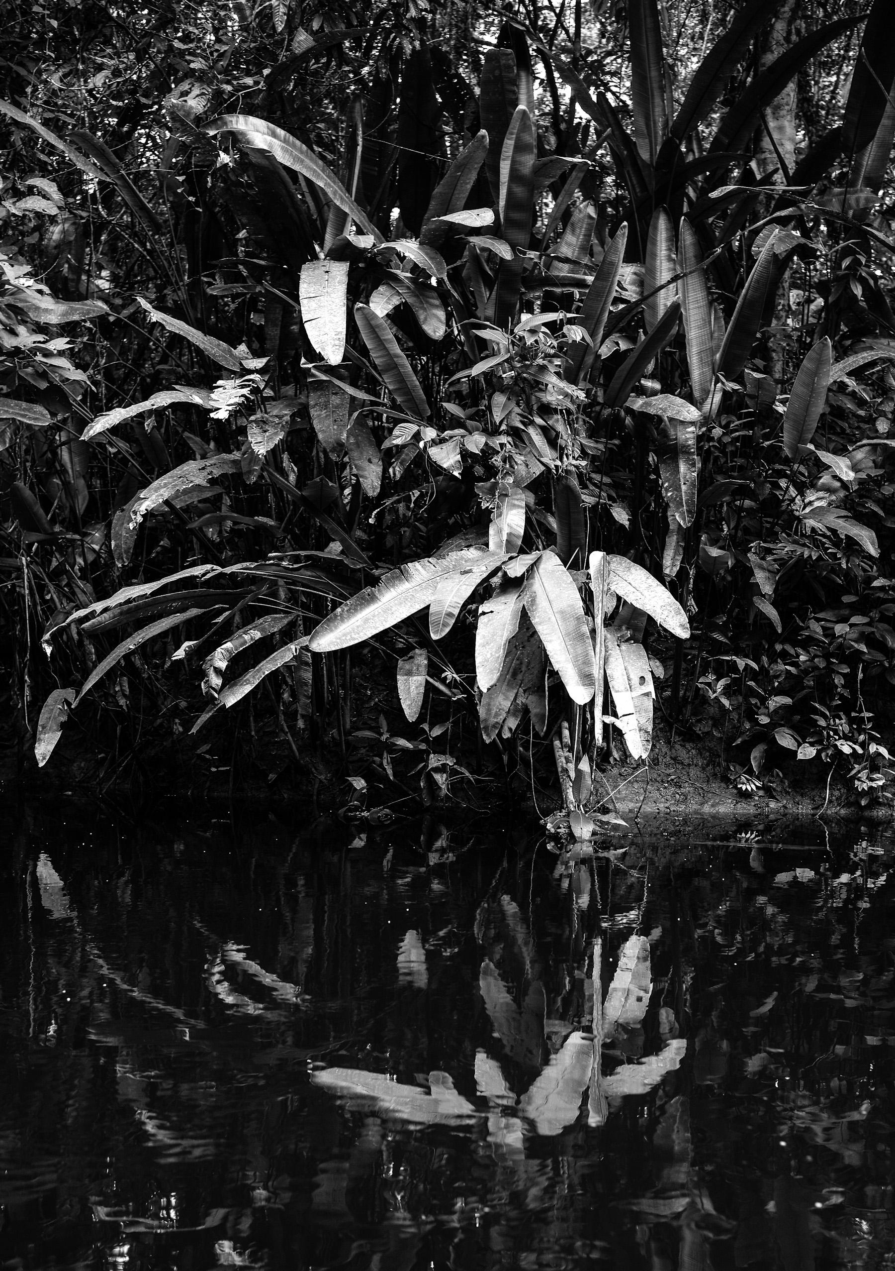 Black & White Flora-27.jpg