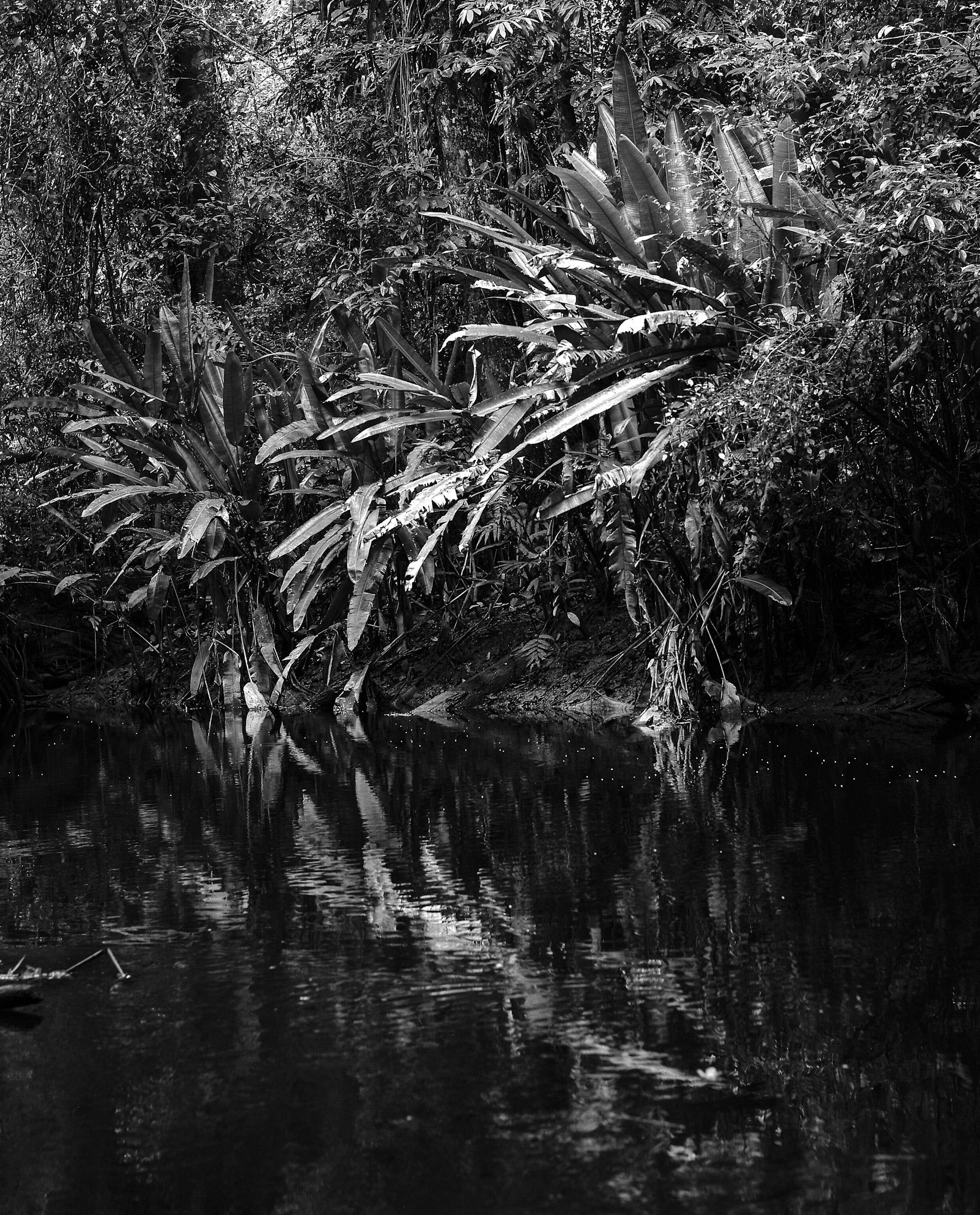 Black & White Flora-28.jpg