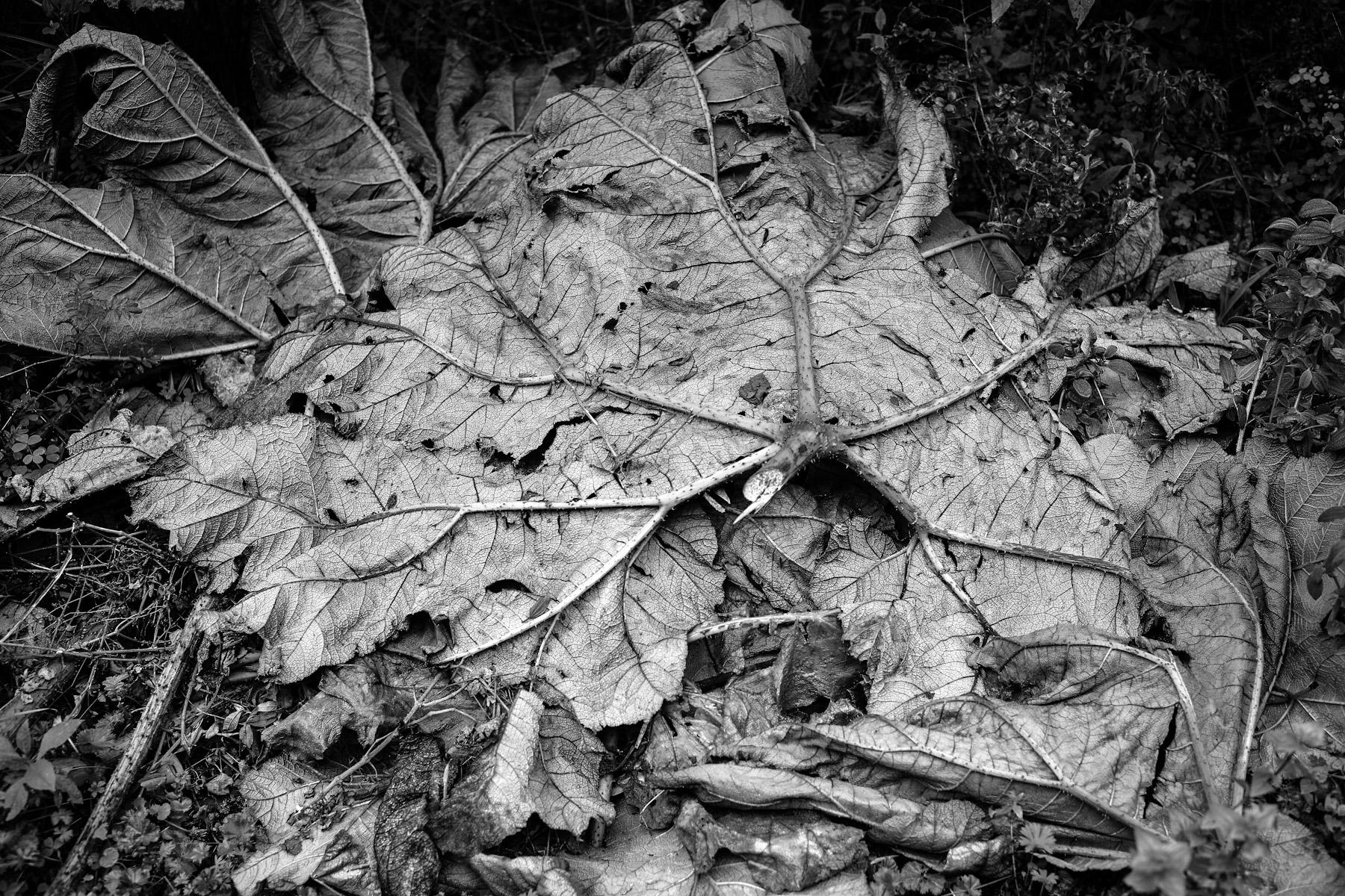 Black & White Flora-29.jpg