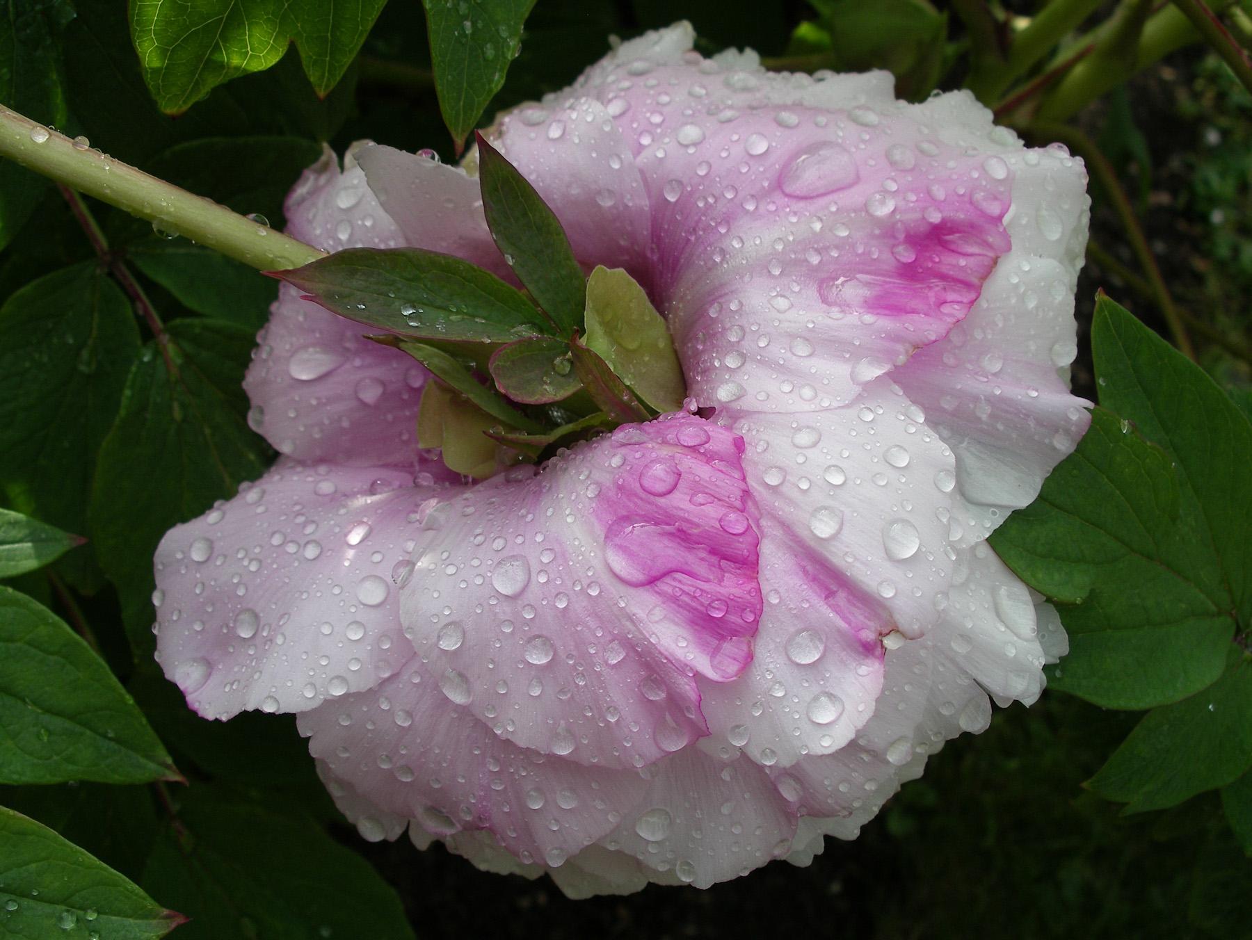 Color Flora-4.jpg