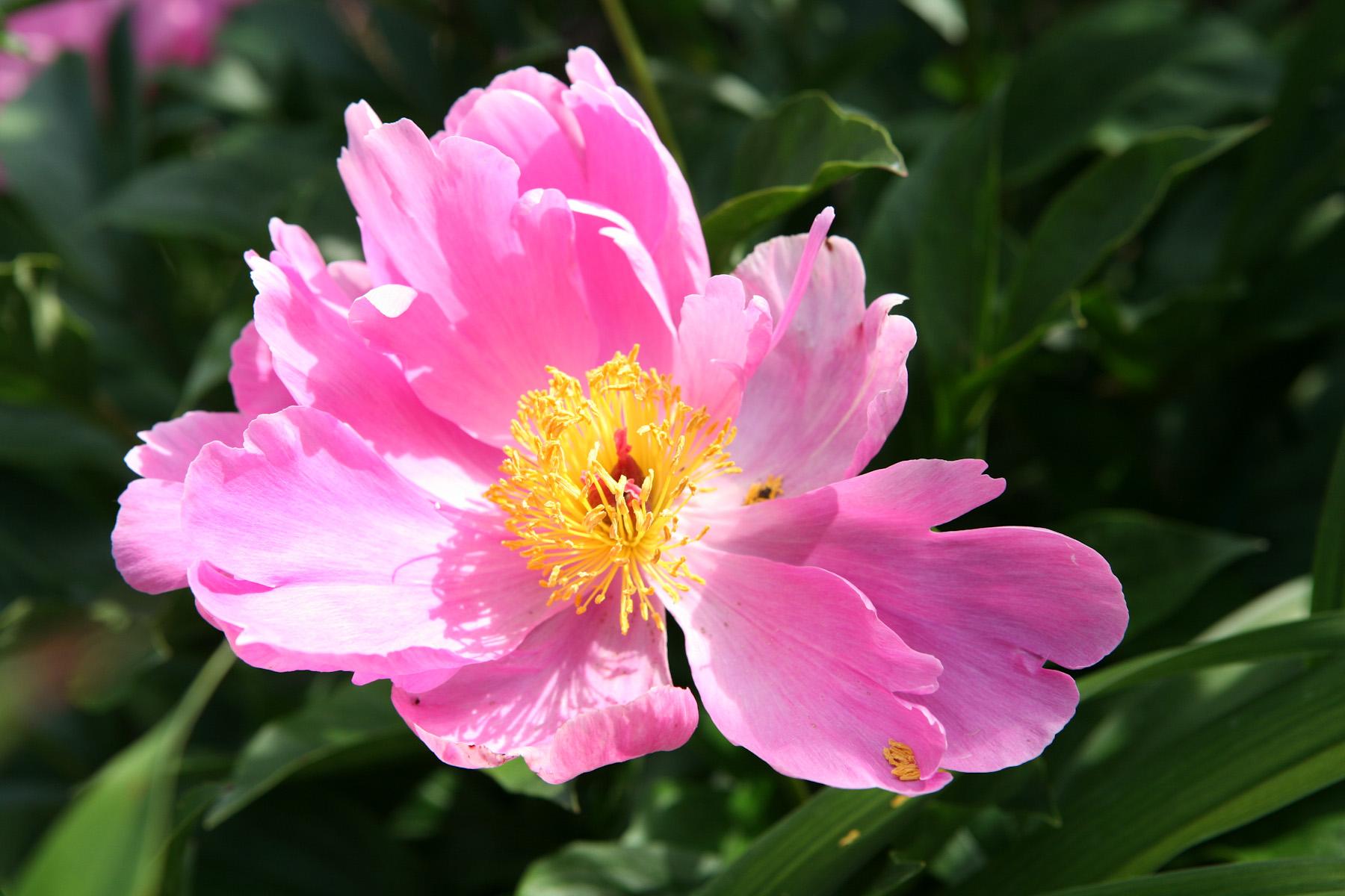 Color Flora-8.jpg