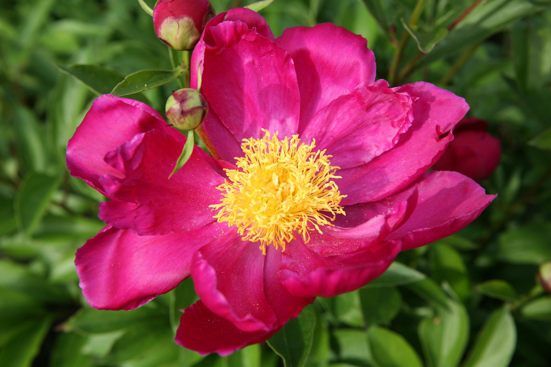 Color Flora-9.jpg