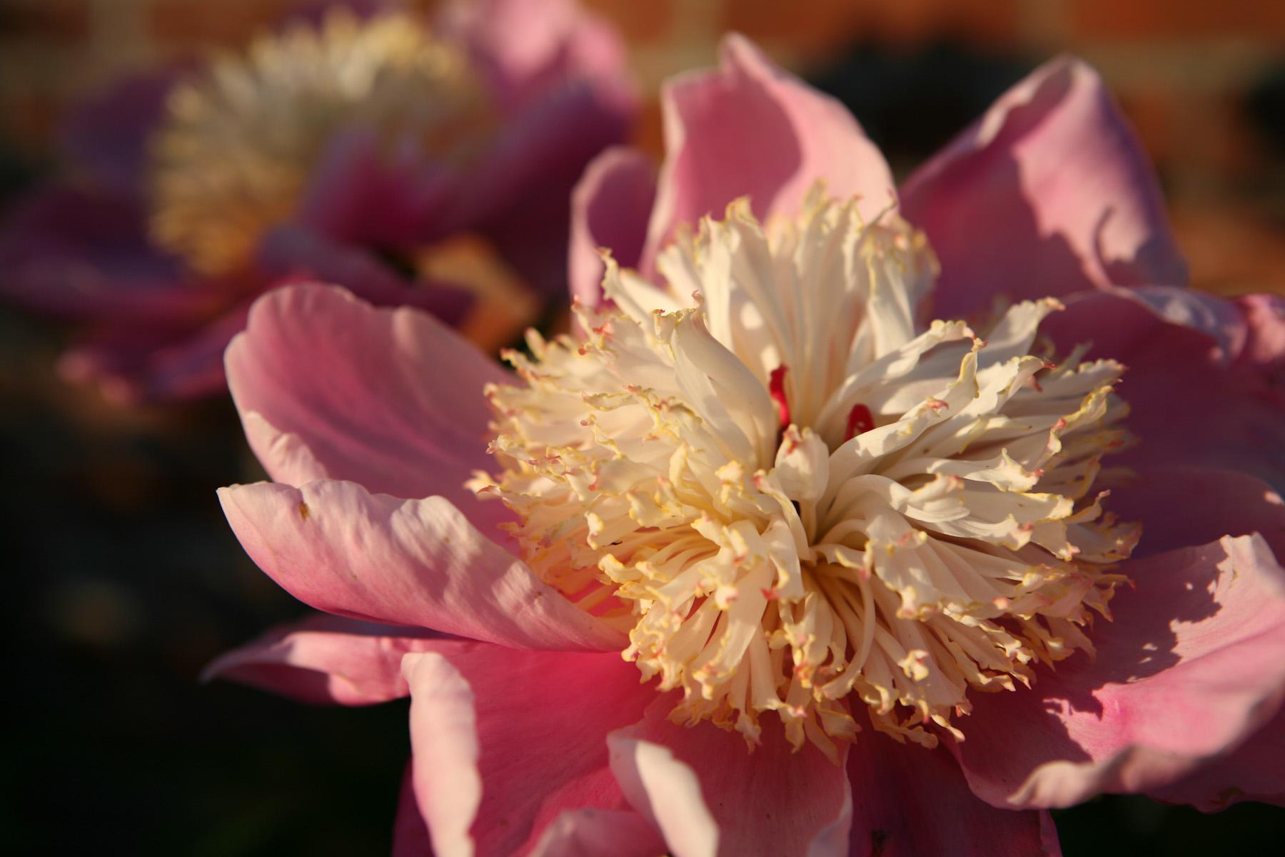 Color Flora-10.jpg