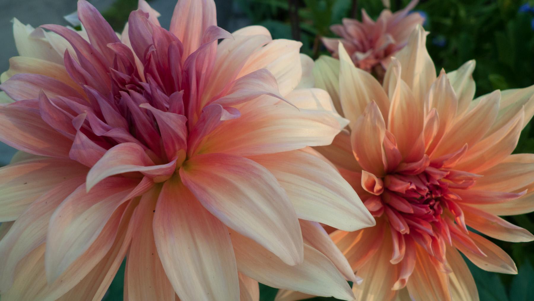 Color Flora-13.jpg