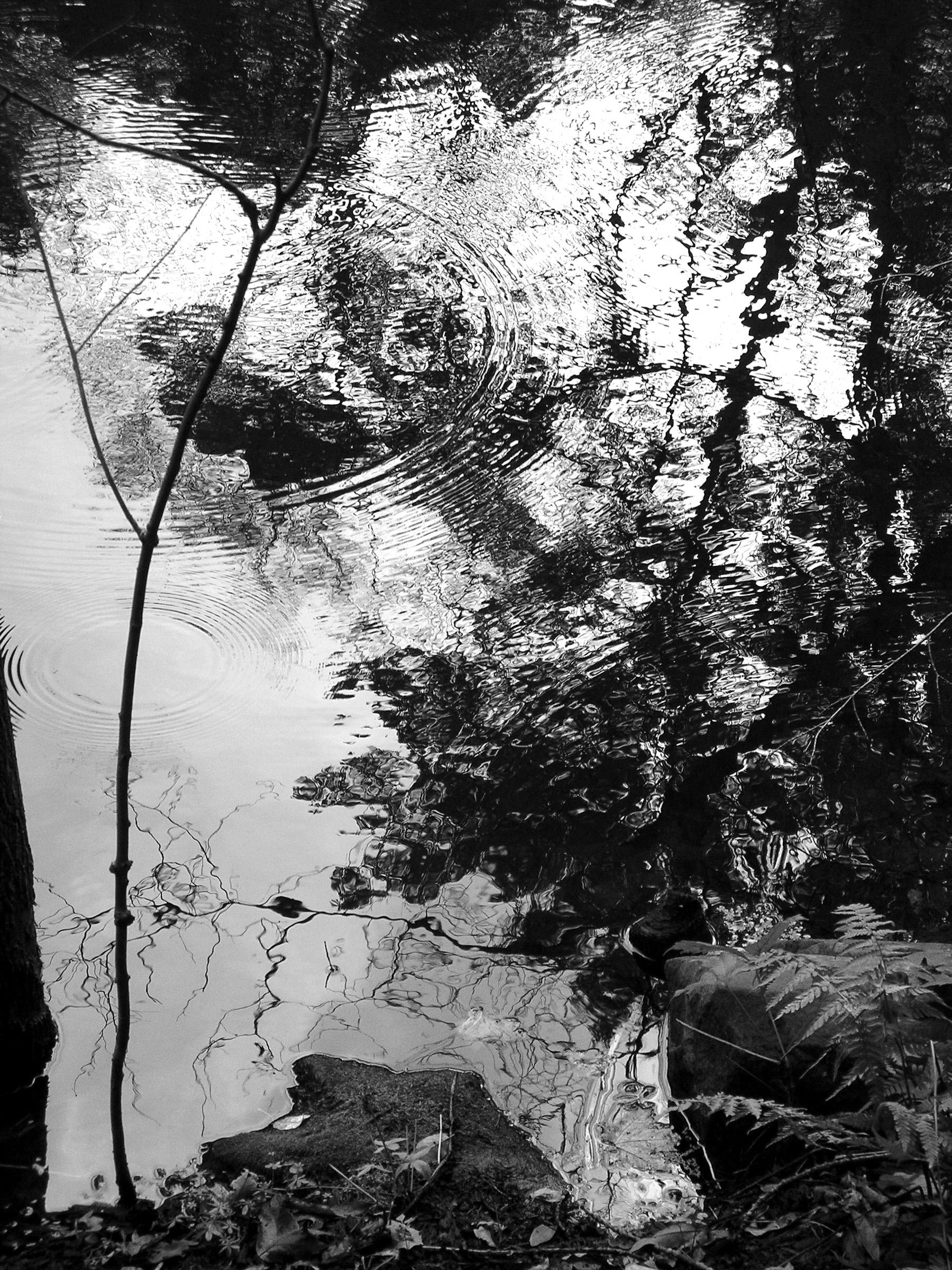 Beaver Swamp-4.jpg