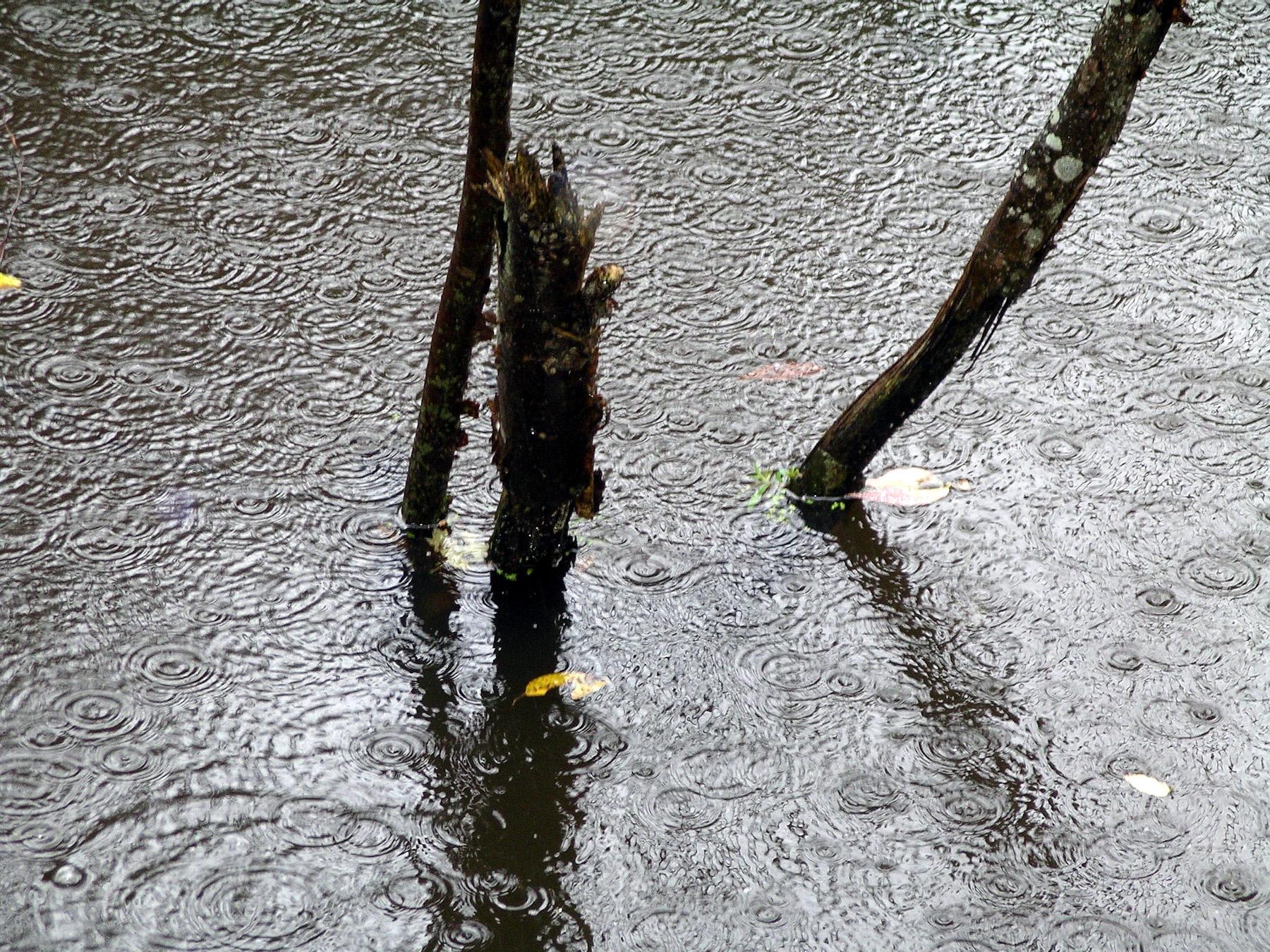 Beaver Swamp-6.jpg