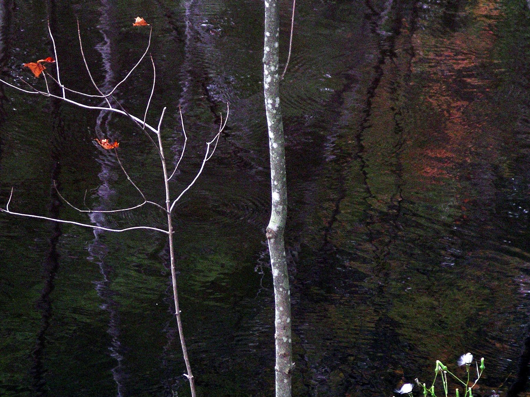 Beaver Swamp-5.jpg