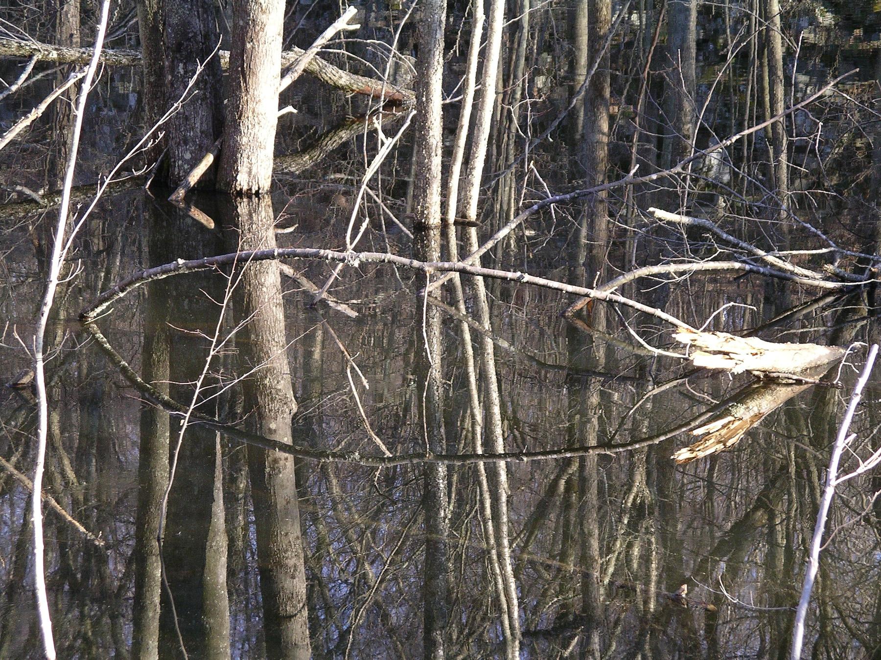 Beaver Swamp-7.jpg