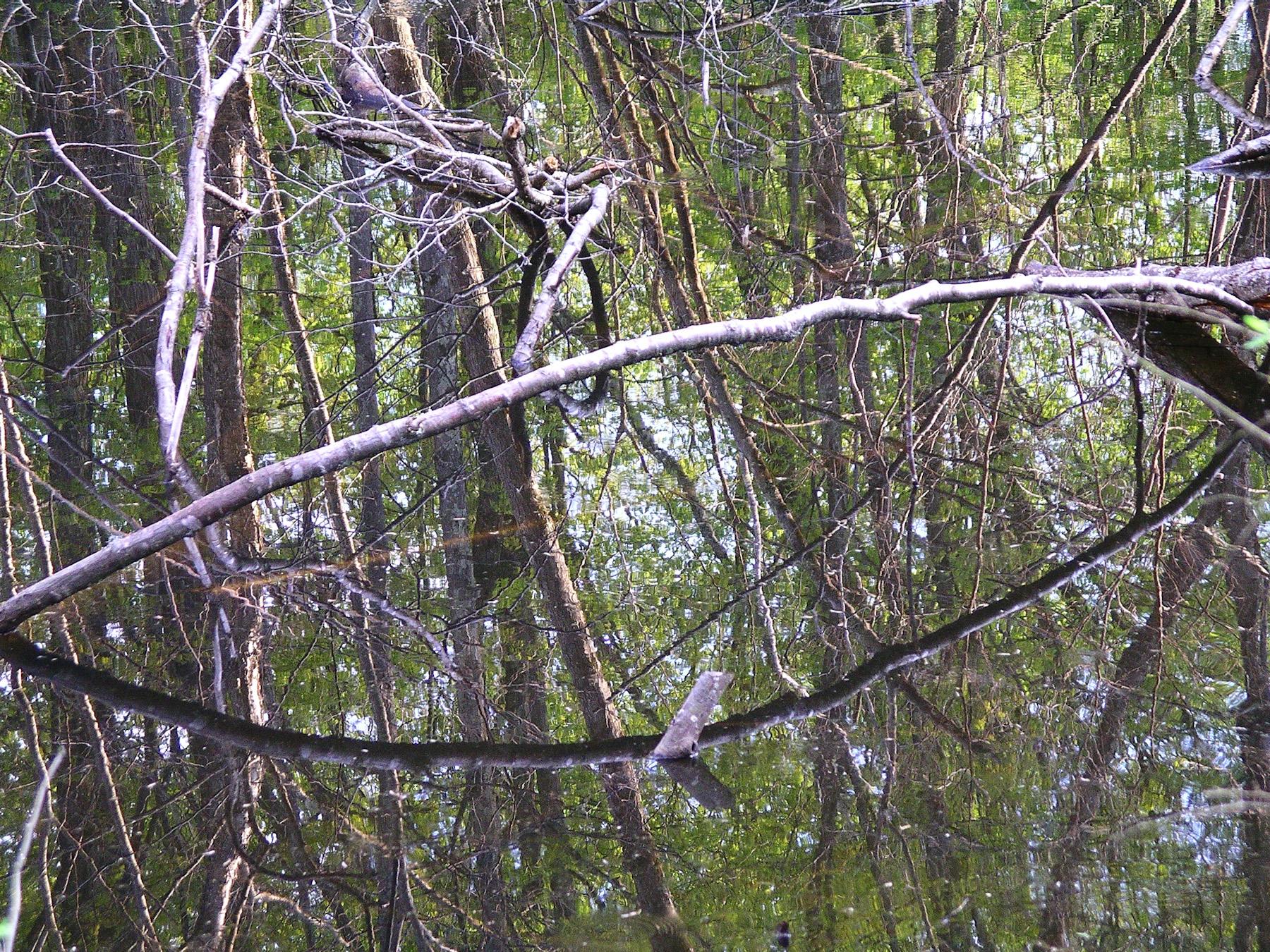 Beaver Swamp-13.jpg