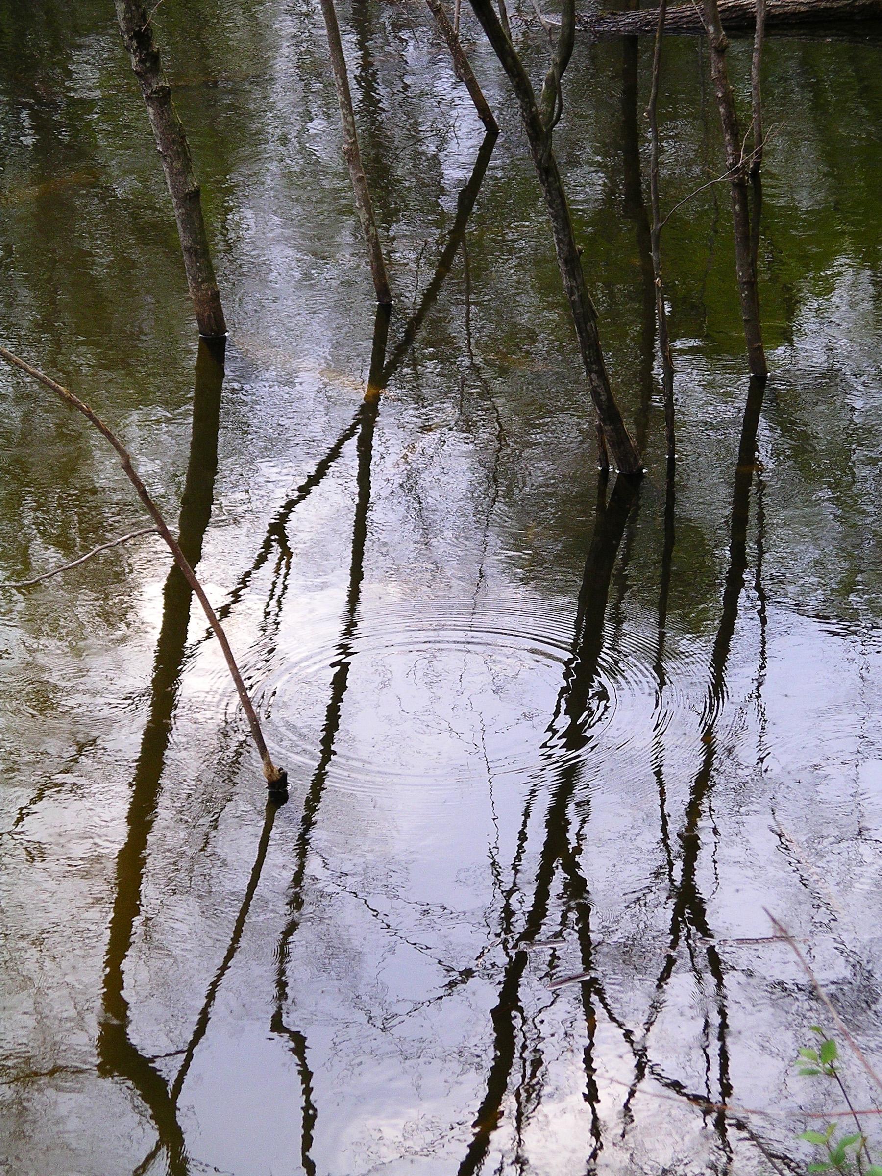 Beaver Swamp-11.jpg