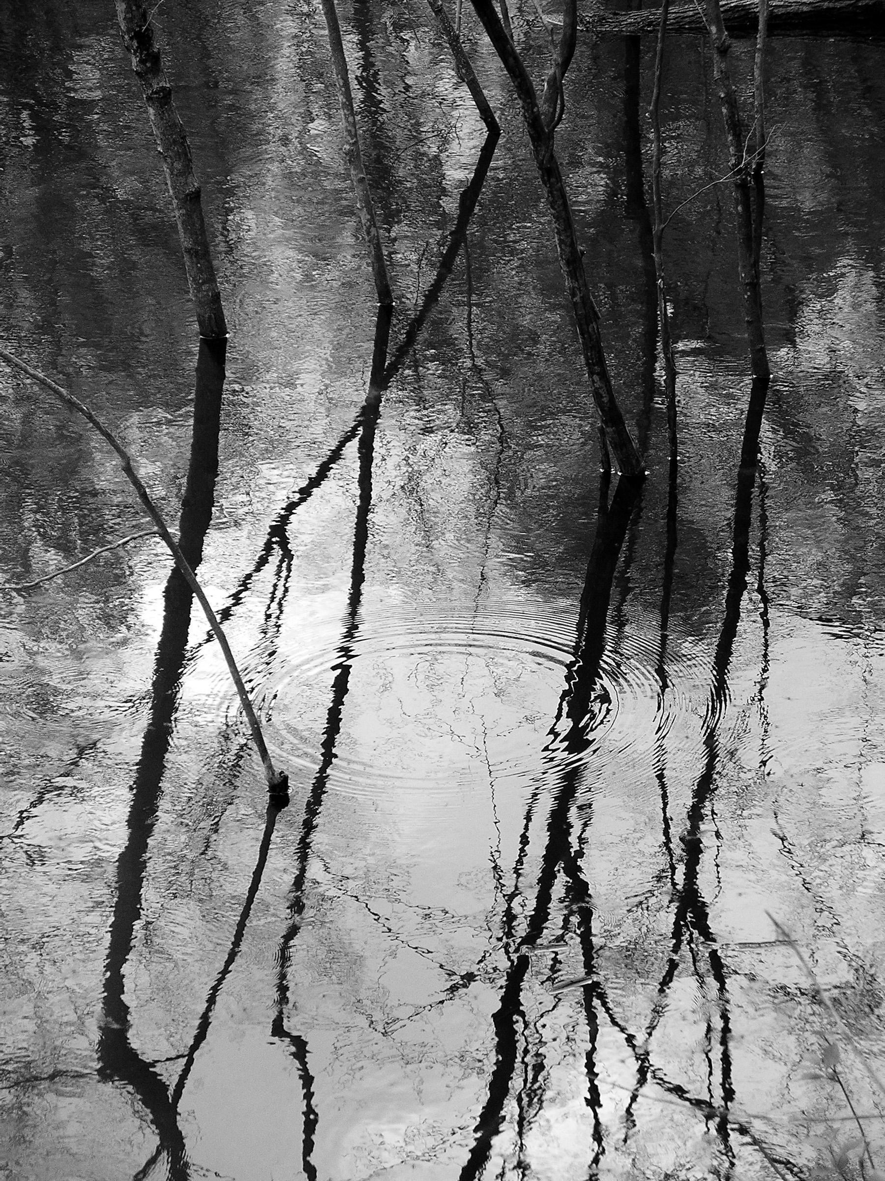 Beaver Swamp-14.jpg